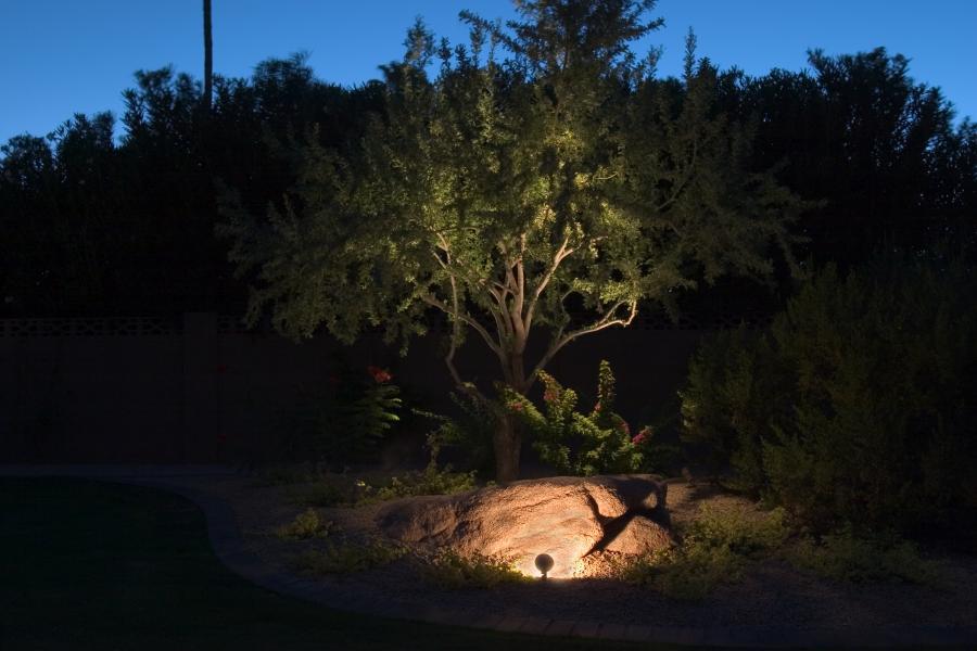 rl_and_tree.jpg