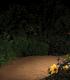 BD Incandescent Path Light